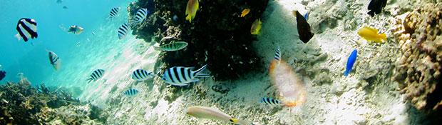 divingfee